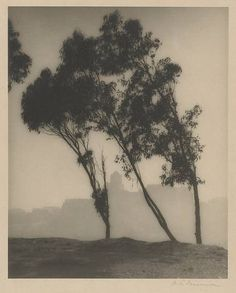 William E. Dassonville Eucalyptus trees and San Francisco skyline 1920 Snap Photography, White Photography, Nature Photography, Fine Art Photo, Photo Art, Snow Covered Christmas Trees, Magical Tree, Eucalyptus Tree, Landscape Drawings