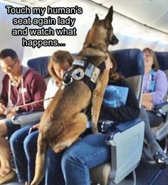 War Dogs, Love My Dog, Military Working Dogs, Military Dogs, Police Dogs, Military Service, Animals And Pets, Funny Animals, Cute Animals