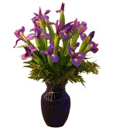 Telestar iris flown in fresh from Holland.  @Boyd's Flower Connection
