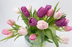 Τουλίπα, Τουλίπες Μπουκέτο, Λουλούδι Άνοιξη, Μπουκέτο