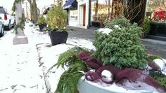 Winter Container by Bowoodfarms in the Central West End