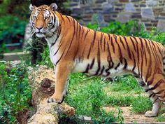 Jore Pokhri Wildlife Sanctuary - in West Bengal, India