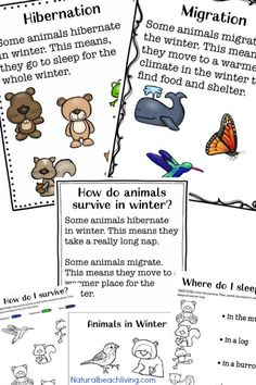 You'll Love These Winter Animals for Preschool Ideas