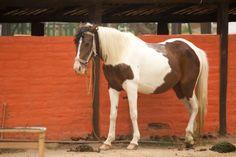 La Granja del Tío Mario Mario, Horses, Animals, Photos, Animales, Animaux, Horse, Animal Memes, Animal
