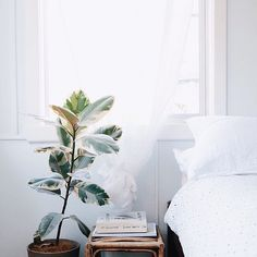 bedside table and plant