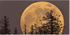 Спутник Земли в ноябре и декабре этого года во время полнолуния будет выглядеть необычно большим из-за максимального сближения с нашей планетой, причем ноябрьская Луна будет рекордно большой за последние 68 лет, сообщили СМИ.  Предстоящее «суперлуние» станет вторым за текущий год - предыдущее подобное событие произошло 16 октября этого года, а следующий восхода необычно большой Луны произойдет 13 декабря. Ноябрьская «супер-Луна», по расчетам астрономов, будет самой крупной из этой тройки, и…