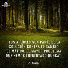 """""""Los árboles son parte de la solución contra el cambio climático, el mayor problema que hemos enfrentado nunca""""."""