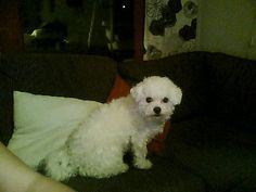My dog Nova