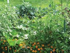 The $1 garden - great article with tips on how to grow a huge garden with $1.00