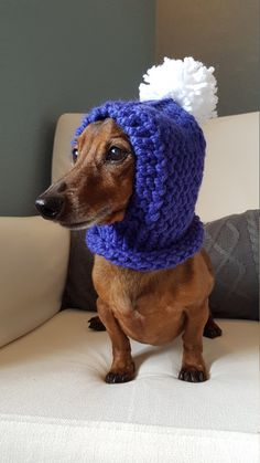Keep your furry friend warm and cozy in this cute pom pom hood! Perfect for those chilly fall and winter walks or use as a costume. Handmade with chunky yarn in Cobalt. Made for a small dog. Model is a Miniature Dachshund weighing approx. 12.5lbs. Hood is stretchy and could fit a slightly larger breed.