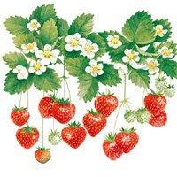 GUARDANAPO SUMMER FRUITS - 2UN - 13308205 - AMBIENTE