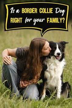 The Border Collie is highly intelligent, eminently trainable, full of energy and good with people, which are just a few of the reasons why many people consider Border Collies to be a good choice of family pet.   But, is the Border Collie a good and safe choice for families with children or other pets?   #BorderCollie #Dog #ilovedogs #familydogs Dog Training Videos, Herding Dogs, Dog Activities, Best Dog Breeds, Collie Dog, Labrador Retriever Dog, Free Dogs, Bull Terrier Dog, Medium Dogs