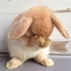 Awww, Somebunny loves you!