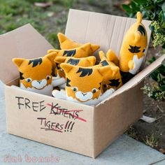That time I thought I found a box of kittens!