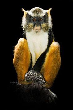 Monkey www.chunkiemunky.com