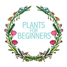 5 plants for beginners. These plants practically grow themselves!