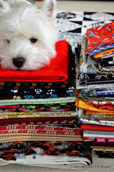 """Westie Julep: Meet The New Additions To My Fabric """"STASH"""""""