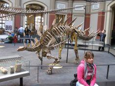 Kentrosaurus aethiopicus. Another favorite :)