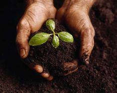 Sustentabilidade: A Importância De Pequenos Gestos