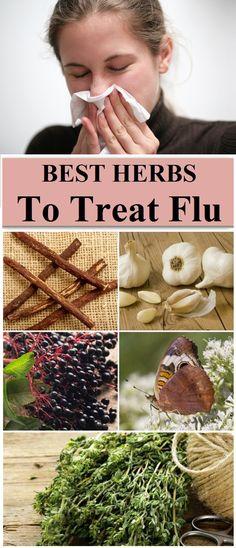 5 Effective Herbs To Treat Flu
