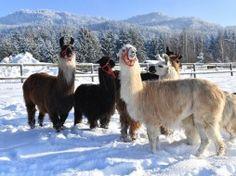 im SCHNEE  -  Jänner 2017 Animals, Snow, France, Bayern, Animales, Animaux, Animal, Animais