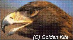 Brown Eagle (small)