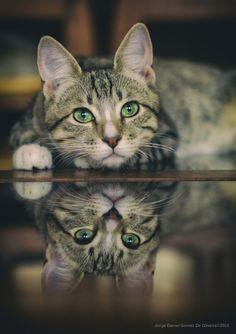 magical-meow:  reflection by Jorge Gomez de Oliveira on 500px
