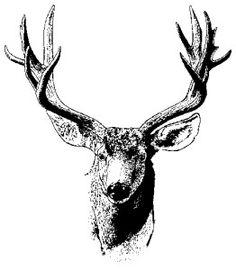 Mule Deer Engraving Pattern