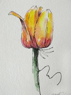 Tulip flower yellow original art watercolor painting pen and