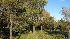 Paisajes veraniegos #fotolia #sold #photo #Photo #photography #design #photographer #Landscapes #summer #green #fields #roads #colorful #buy