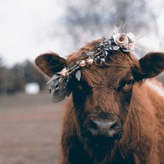 A cow ready for Tessa and Nate's wedding!