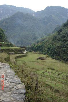 Dahang