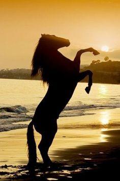 """""""Um cavalo sem cavaleiro é apenas um cavalo, mas um cavaleiro sem cavalo é apenas um homem."""" Diga NÃO as carroças e a escravidão animal! Isso basta de maus-tratos contra os animais!  Todos os animais têm direitos de viver a liberdade e nenhum animal merece de ser maltratado e explorado."""
