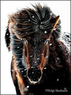 A Snowy Black Beauty ♥