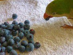Rural Revolution: Canning blueberries