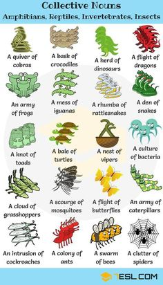 Collective Nouns For Animals in English Animal Group Names! Learn useful list of collective nouns for animals (turkeys, owls, crows,.) with example sentences, video and ESL printable worksheets. English Vinglish, English Idioms, English Study, English Lessons, English Resources, Grammar And Vocabulary, English Vocabulary Words, Learn English Words, Learn English Grammar