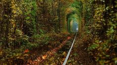 Tunnel of love during Fall