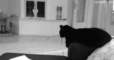 Acuario siendo un gato