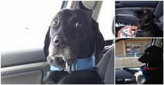 """""""We're going where??""""http://diply.com/trendyjoe/dogs-just-realized-going-to-vet/145100?ts_pid=2&ts_pid=2&ts_pid=2"""