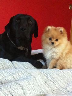 These will be my two dogs one day. Big one for Brad and Foxy Cena for me :)