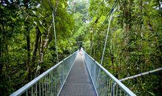 Rex Creek Suspension Bridge Suspension Bridge, Places Ive Been, Paths, Stuff To Do, To Go, Around The Worlds, Australia, Outdoor Decor, Image