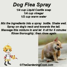 DIY Dog Flea Spray - Go Green -  http://thegardeningcook.com/diy-dog-flea-spray/