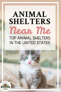 Animal Shelters Near Me: Top Animal Shelters In The United States! Small homesteading ideas, homesteading ideas simple living, homesteading ideas self sufficient, homesteading ideas small farm, homesteading ideas diy, homesteading ideas off grid, backyard homestead ideas, tiny homestead ideas, homesteading ideas gardening, Homestead farm, backyard Homestead, flower Gardening, vegetable Gardening. #homestead #homesteading #homesteader #homesteadlife #homesteadkitchen #homesteadinglife Flower Gardening, Vegetable Gardening, Animal Shelters Near Me, Raising Cattle, Farm Lifestyle, Rabbit Breeds, Horse Feed, Homestead Farm, Cattle Farming