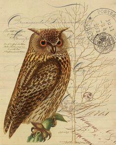 Paper Harvest Owl Botanical Print