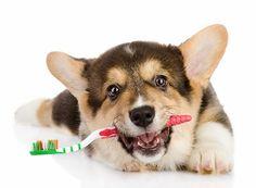 Se você tem um cachorro e o ama mais do que tudo, precisa saber dessas 20 dicas importantes para cuidar bem dele e deixá-lo saudável e feliz. Confira!
