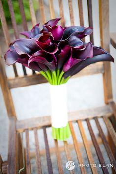 Schwarz black calla lillies