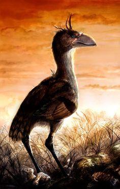 New Terror Bird called Llallawavis scagliai by Martina Charnelli