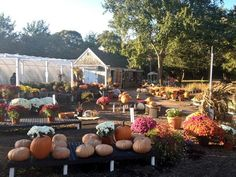 Looking for a great place to find Halloween pumpkins and treats? Head over to CapeAbilities in Dennis.