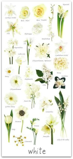 Essential white wedding flower guide names types pics wedding have you ever found a picture of a bouquet and wondered what is that flower here is a collection of flower names sorted by color mightylinksfo