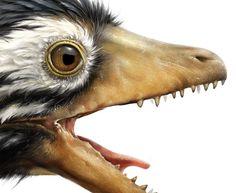 Archeopteryx vs Confuciusornis by Eldar Zakirov, via Behance